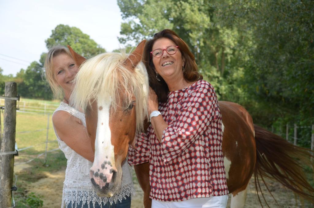 Soin de Libération du Péricarde sur les chevaux
