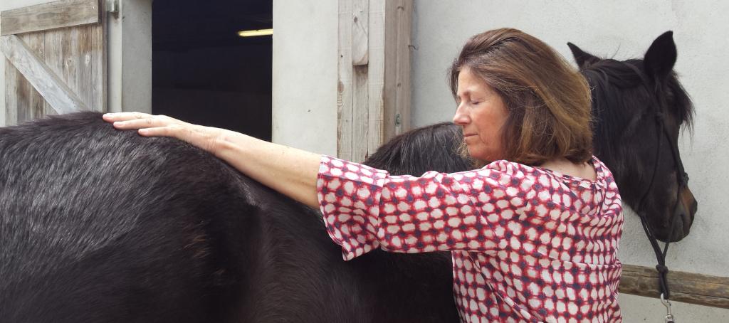 Formation Libération du péricarde Humain et Equin